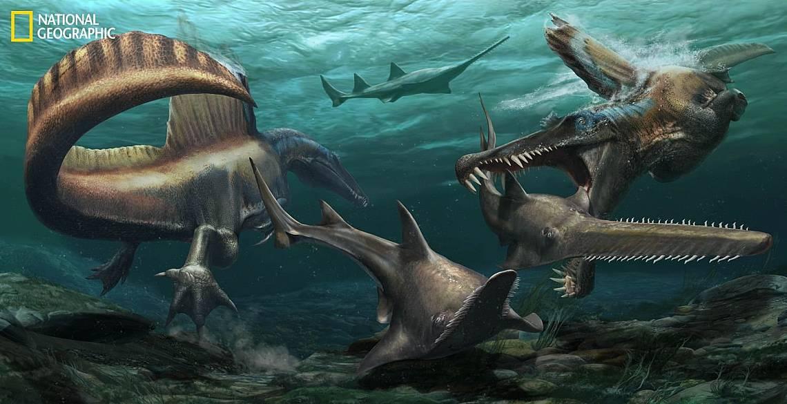 Два Spinosaurus aegyptiacus преследват Onchopristis, в реките, които са покривали Мароко преди повече от 95 милиона години. Илюстрация: JASON TREAT,...