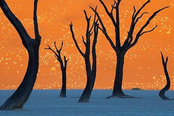 Необичайни дървета
