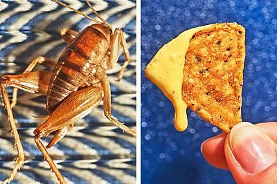 Менюто на бъдещето: насекоми, плевели и бургери с вегетарианско месо