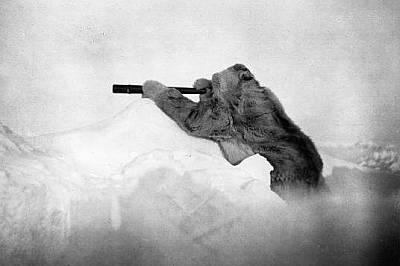 Робърт Едуин Пири търси земя на хоризонтаРобърт Едуин Пири търси земя на хоризонта по време на третия му опит да стигне до Северния полюс през 1909 г....