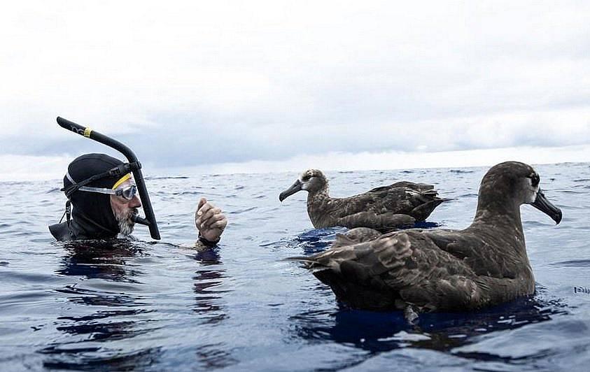 Лекомт с албатроси в Големия тихоокеански боклуковъртеж