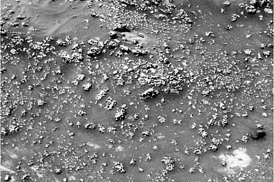"""Роувърът на НАСА """"Спирит"""" заснема тези кварцови образувания на Марс, които много приличат на подобните на карфиол структури, които се образу..."""