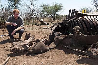 Принц Хари осъжда бракониерството след посещението си в Африка