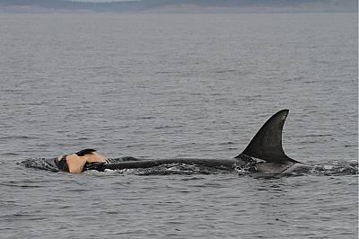 Китовете скърбят за мъртвите си като нас