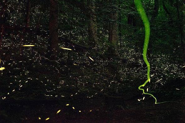 Светулки в лятна нощ в Тенеси. Снимка: Дейвид Лийтшвагер, National Geographic Creative