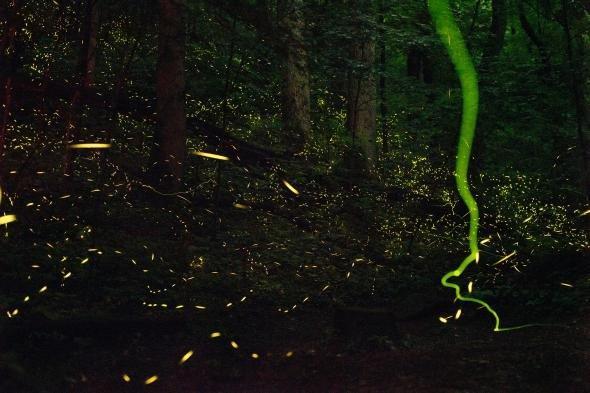 Защо светят светулките