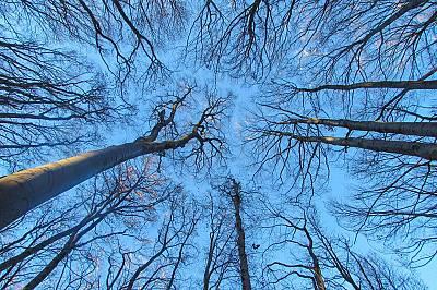 """Душата на горатаПърво място в категория """"На почивка"""""""