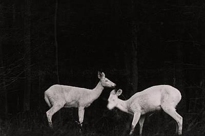 Една от първите фотографии на животни, публикувани в списаниетоВ боря от юли 1906 г. National Geographic публикува първите фотографии на жив...