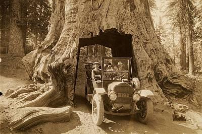 """Национален парк """"Йосемити""""Туристи минават през дърво, превърнато в тунел, в Тулумни гроув, национален парк """"Йосемити"""" (през 1922 г..."""