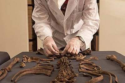 Археологът Дон Уолкър изучава жертва на чумата от 1665 година.