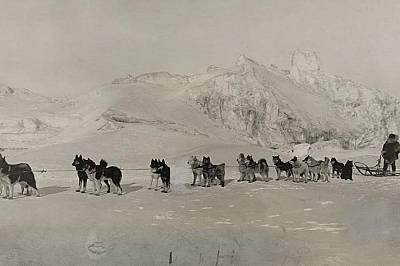Водач на впряг с кучетата сиВодач на впряг позира с кучетата си на тази снимка от 1919 г.