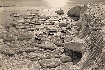 Тюлени се припичат на слънце.