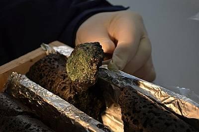 Учените улавят въглеродните емисии като ги свързват с базалтови скали.