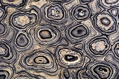 По вкаменелости на строматолити като този, намерен в Боливия, може да предполагаме какъв живот може да намерим на Марс.