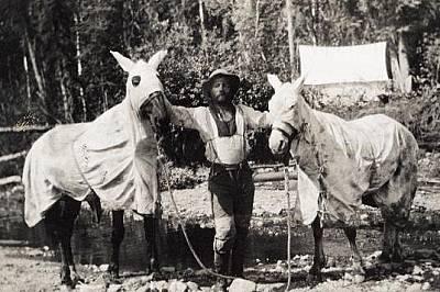 Конете също са се пазили от комарите. Снимката е от 1912 г. и се появява в статия, посветена на 141 меридиан – вертикалната линия, минаваща...