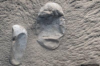 Две от новооткритите яйца на птeрозаври.Палеонтолозите са открили най-малко 215 яйца в един блок пясъчник. Вероятно във вътрешността му се крият още.