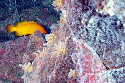 Микробни килимчета обгръщат коралов риф на дъното на Тихия океан.