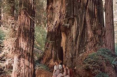 В Националния парк РедуудСеквоя в щатския парк Редууд.