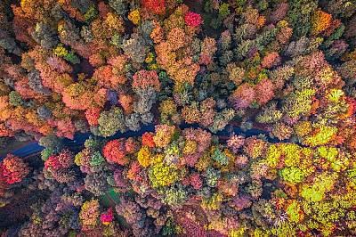 Есенни дървета обточват път в гора край Вилнюс, Литва