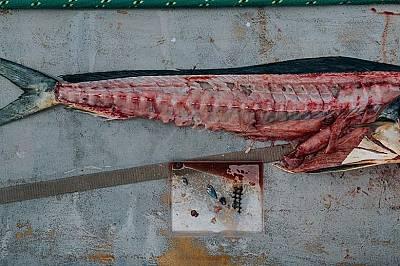 Тази пластмаса е намерена в стомаха на рибата махи-махи