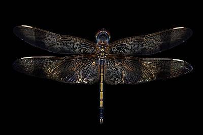 Хелоуинско висящо водно конче (Celithemis eponina)Името си насекомото дължи на оранжевите и кафяви ивици по крилете.
