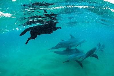 Куче плува с делфини афали в морския резерват Понта До Оро, Мозамбик.