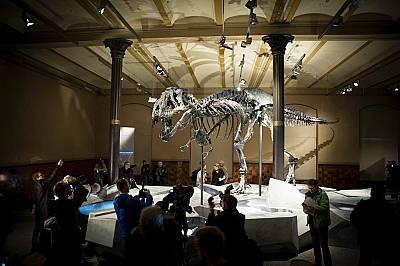 Тристан, Tyrannosaurus rex, в Берлин, Германия. Тристан е бил намерен в Монтана и е един от най-добре запазените скелети на големи динозаври.