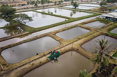 Пресъхва най-голямото езеро в Камбоджа