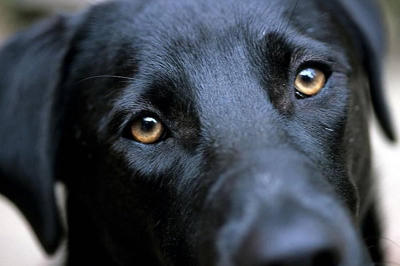 Кучето разговаря с нас чрез очите си - галерия