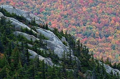 "Парк ""Адирондак"", Ню ЙоркИглолистни дървета покриват скалите в парка ""Адирондак"", Ню Йорк."