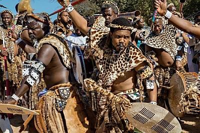 Търсенето на скъпите кожи, носени на зулуски християнски ритуали като този край Дърбан, Южна Африка, стимулира бракониерството. Природозащитната орг...