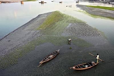 Река Тиста, БангладешСамунир, на 30 г., работи на нивата си в Кауниа, Бангладеш на 1 декември 2008 г. През 2005 г. загубил три акра ориз заради ерозия...