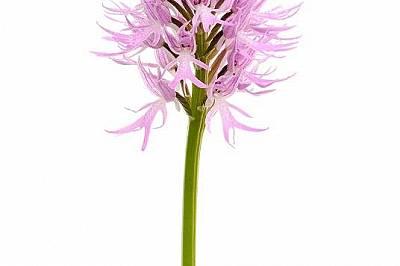 Светът на орхидеите