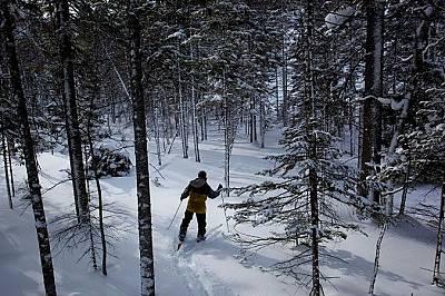 Скиор се придвижва през засенежените дървета на платото Юкок.