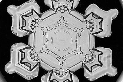 Няма две еднакви: първите фотографии на снежинки, публикувани през 1923 г.