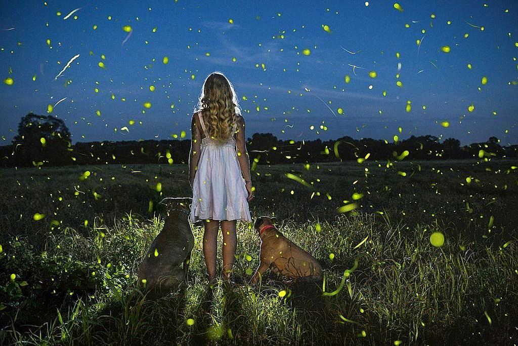 Летни светлиниСветулките танцуват своя танц, а кучетата и малката дама им се възхищават