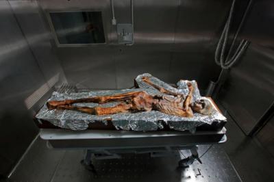 Мумията на Йоци се съхранява в охлаждаща камера на археологическия музей в Болцано - Южен Тирол, Италия. Музеят получава около 15 искания от учени на...