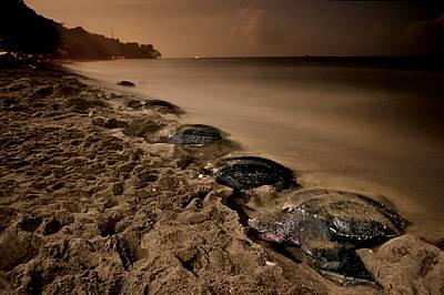 Прииждащите кожести костенурки изпълват пясъците на Гранде Ривиере в Тринидад, за да снесат яйцата си под лунната светлина. Вълните могат бързо да под...