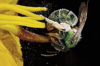 Феите на златния прашец