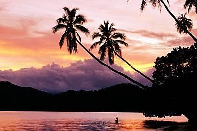 Палми, ФиджиПалмови дървета по залез слънце на остров Матанги, Фиджи.