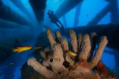 Изкуствени рифове