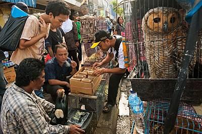 Сред животните за продан на пазара Джатинегара в Джакарта, Индонезия, има щурци в бамбукови тръбички и нелегално уловени диви животни за домашни любим...