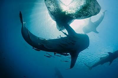 Споделено с акулите