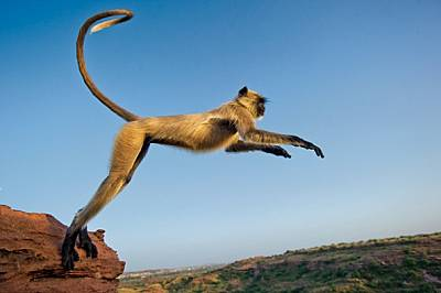 Маймуната, която прескача граници
