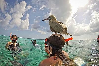 Най-доброто мястоВ момента, в който птицата кацна, на главата й настана истинско оживление