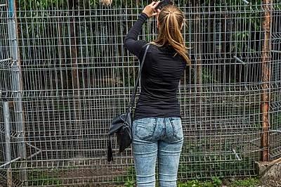 Лъвове в зоопарка в Литва спят докато ги снимат. Телевизионните канали и социалните медии са пълни с кадри на хора, които са в близък контакт с големи...