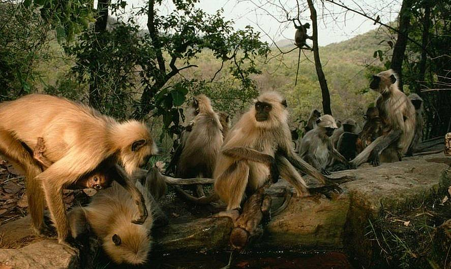 Национален парк Бандхавгарх, Индия