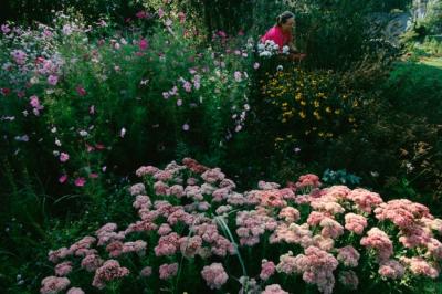 Градина за пеперудиИстория в изданието от февруари 2001 г. описва подробно усилията за възстановяване на блатистите блата на Ню Джърси. Тук една ж...