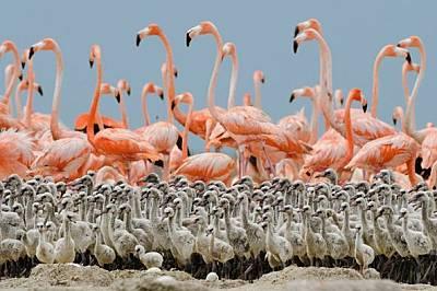 Странни птици