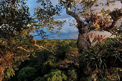 Джунгла за продан